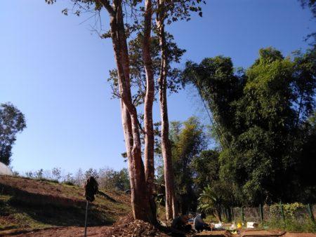 まっすぐに伸びる樹と青空
