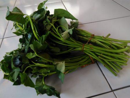 ハート型タイプの空芯菜